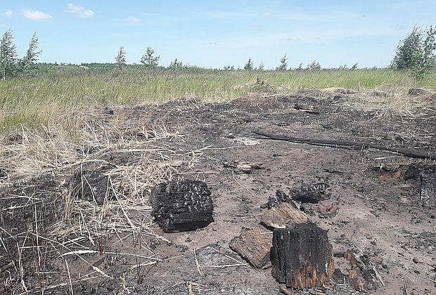 Поджигатели уничтожили труд волонтеров