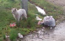 Главу Тольятти попросили отловить бродячих собак ради безопасности футболистов