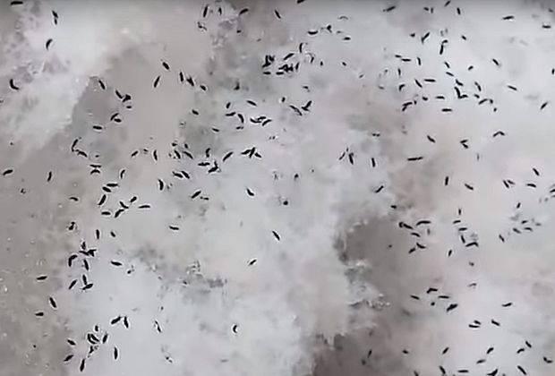 Снег с насекомыми выпал под Сызранью