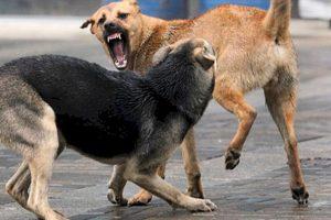СК снова начал расследование по фактам нападений собак на детей в Тольятти