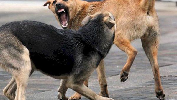 «СО»: два муниципалитета попросили вернуть им право отстрела собак