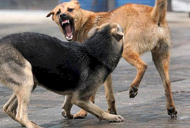 Определили норматив на отлов собак
