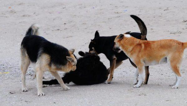 Стая собак напала на детей в Шлюзовом
