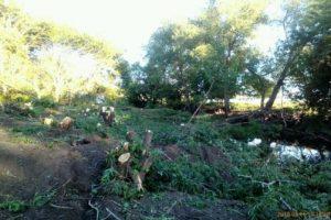 В Нижнем Санчелеево вырублены деревья, защищавшие село от разлива реки