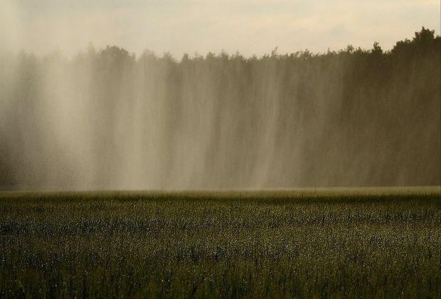 Для тушения лесных пожаров будут использовать искусственный дождь