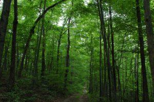 МЧС напомнило о правилах безопасности в лесу