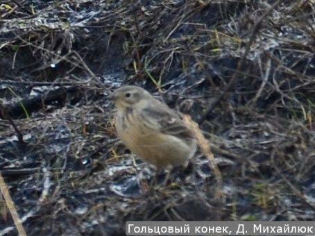 Уникальная птица залетела в Самарскую область