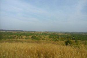 У Тольятти появился шанс получить 10 тысяч евро на восстановление леса
