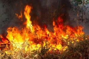 Администрация Тольятти обещает покарать поджигателей