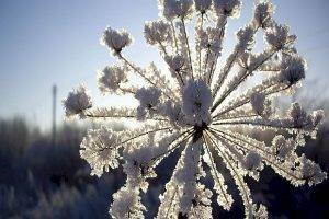 Метеорологи бьют тревогу: сильная изморозь