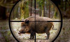 Заблокирован сайт по продаже браконьерских орудий охоты