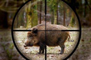 СМИ: Замдиректора нацпарка «Самарская лука» организовывал охоту для жигулевских бандитов