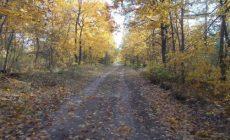 Лапушкина пообещала сохранить парк 60-летия Советской власти