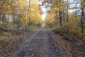 Почему строить дорогу через лес нельзя ни в коем случае
