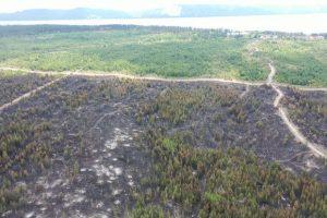 Власти начали задерживать всех посетителей тольяттинского леса