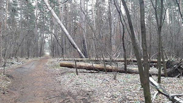 Акция по очистке леса от хлама отменяется