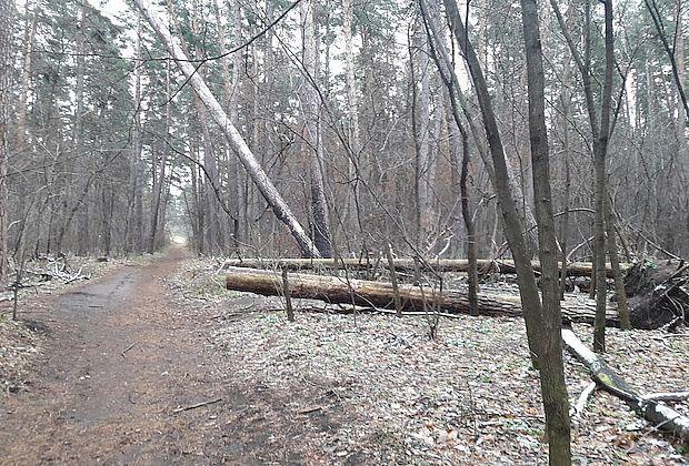 Начата проверка возможных нарушений при вырубке тольяттинского леса