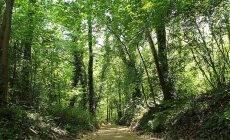 Дума рассмотрит вопрос о строительстве автомойки в лесу