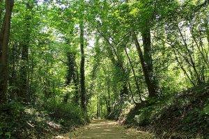 Ради сохранения парка поменяют генплан Самары