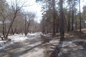 Новый этап уничтожения леса в Комсомольске