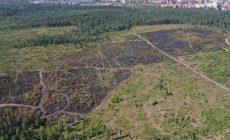 Стали известны масштабы ущерба от последнего лесного пожара в Тольятти