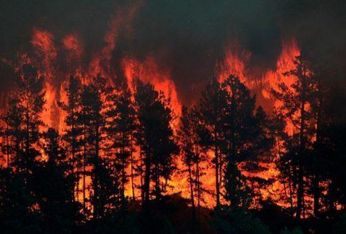 В регионе запрещено разведение костров и увеличены штрафы за нарушение противопожарного режима