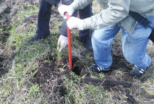 В Тольятти активисты начали сбор средств на посадку леса