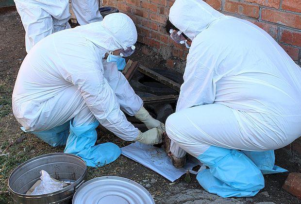 Прокуратура нашла под Самарой бесхозный могильник с сибирской язвой