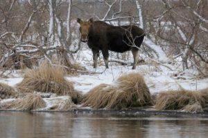 Работники НП «Самарская лука» добились возбуждения уголовного дела в отношении браконьеров
