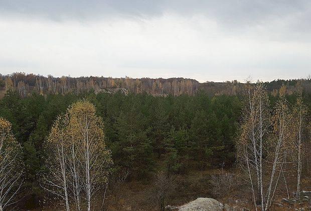В вырубке леса под свалку не нашли нарушений