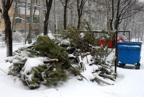 Новогодние елки примут на переработку