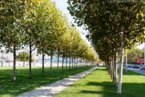 Самарцы требуют озеленить город