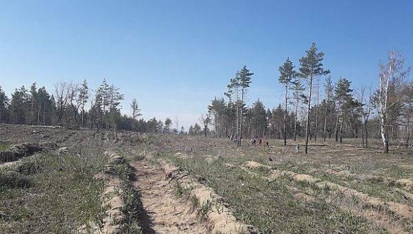 Коронавирус грозит уничтожением тольяттинскому лесу