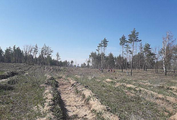 Тольяттинцы восстанавливают лес