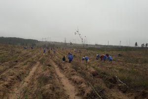 Тольяттинцы за два дня посадили больше 7 гектаров леса