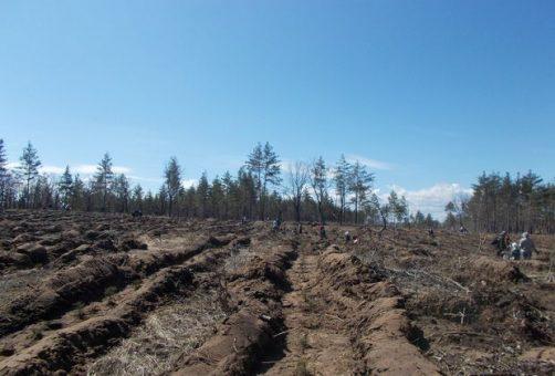 Добровольцы в Тольятти посадили несколько гектаров леса