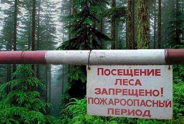 Жителей области предупредили о двойных штрафах за посещение лесов
