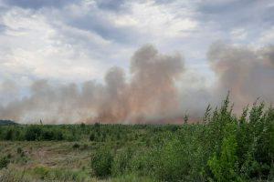В Тольятти разгорелся самый сильный лесной пожар за последние десять лет