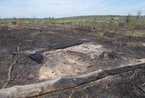 В Тольятти выгорело около 20 гектаров леса