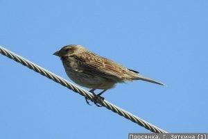 В Жигулях засняли редкую средиземноморскую птицу