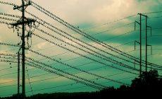 Прокуратура защитила птичьи права