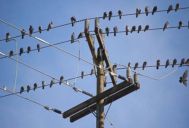 Энергетиков обязали защищать птиц от электротока