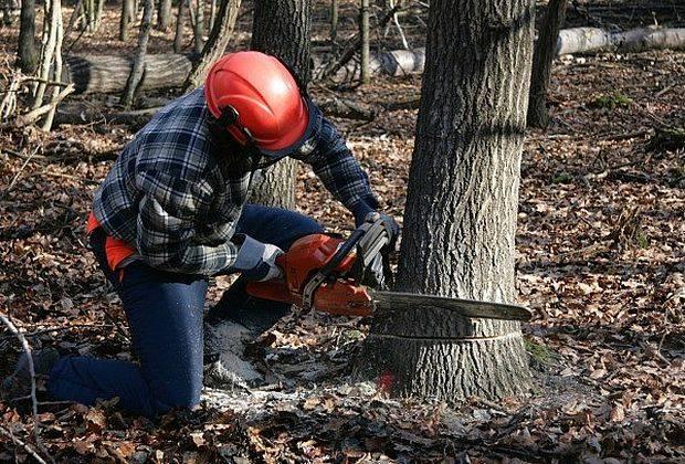 Вексельберг тянет теплотрассу через лес в Тольятти