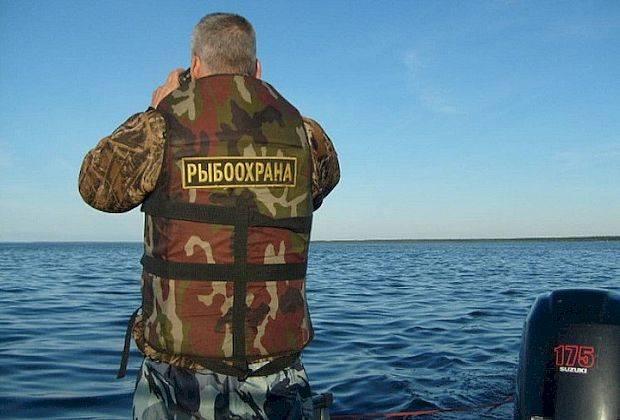 Представитель Росрыболовства признала, что ведомство не может справиться с браконьерами