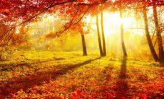 Синоптики прогнозируют погодные аномалии в октябре