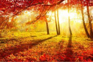Метеорологи обещают теплый и сухой сентябрь