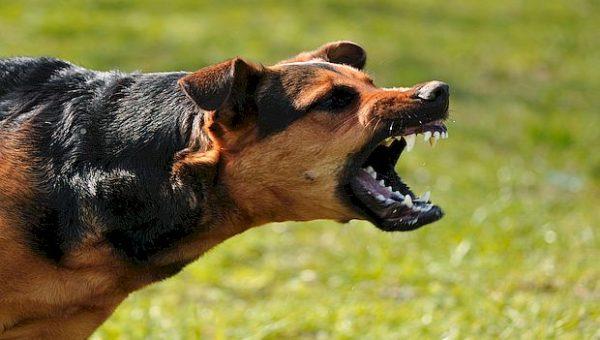 Следственный комитет возбудил дело о нападениях собак на детей