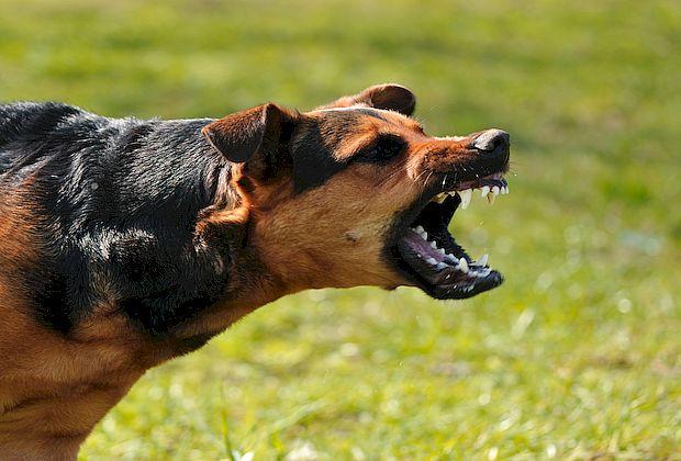 Отбиваться от собак будете самостоятельно