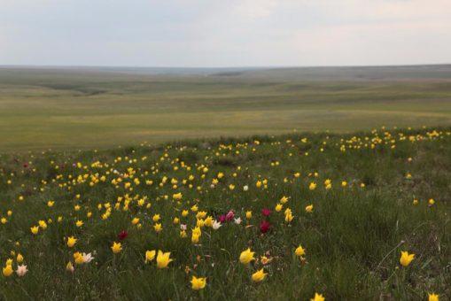 Нефтяная компания планирует начать бурение на территории памятника природы