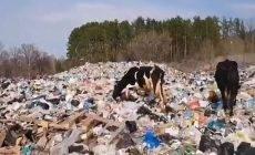 В Рождествено будет организована «площадка временного накопления» отходов